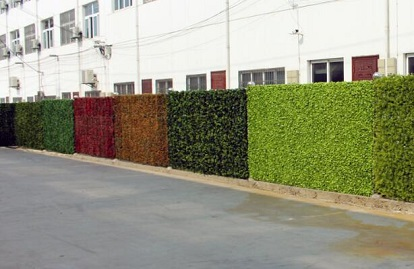 privacy hedges.jpg