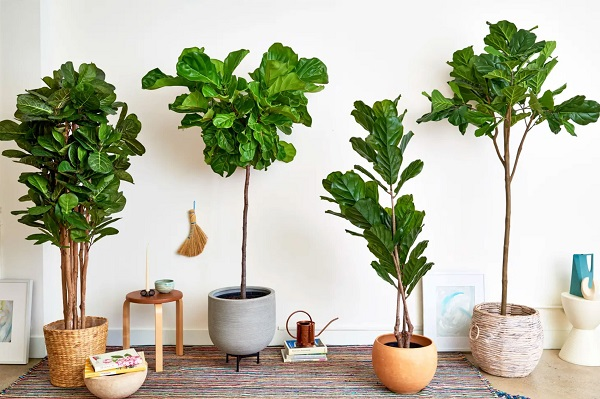 faux potted PE trees.jpg