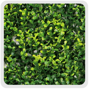 boxwood mat with yellow leaf,G0602A006